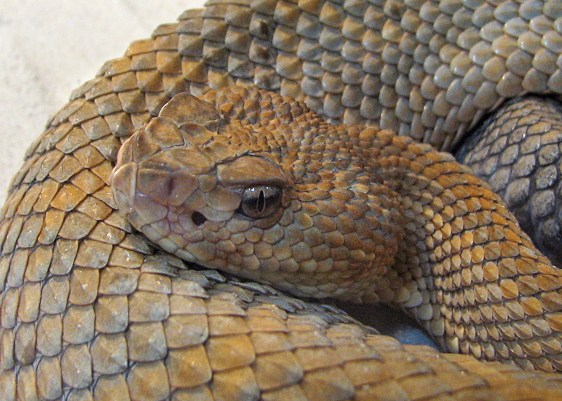 Learn About Rattlesnake Kate in Greeley, Colorado History